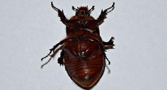 Jedzenie insektów przypłacił życiem!